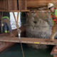 Structural Repairs to Jetty Pilings